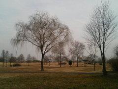 渡良瀬遊水池の木々